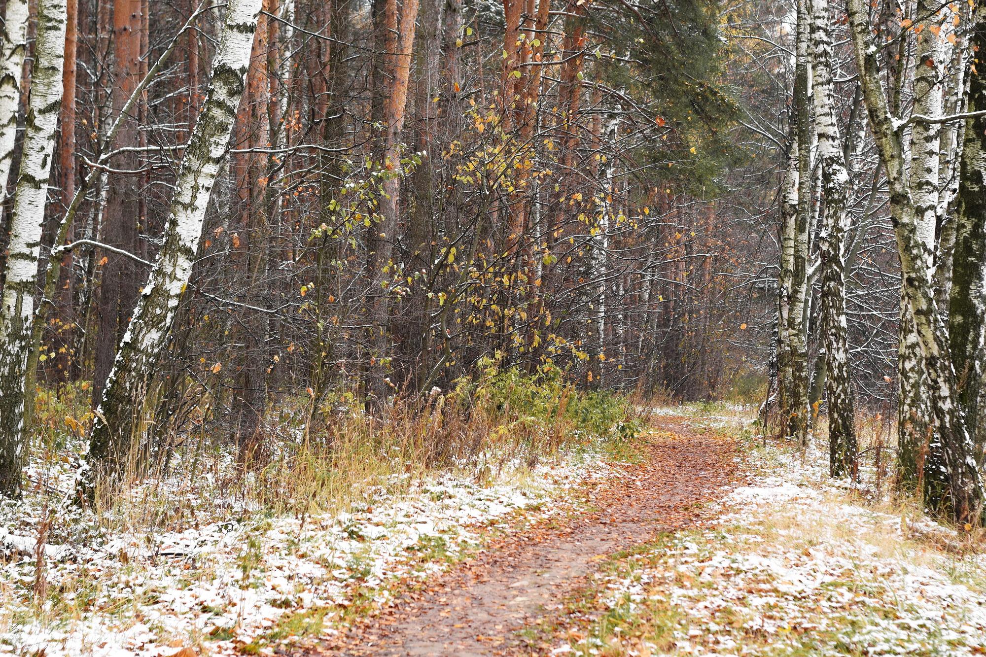 осень в Зеленограде