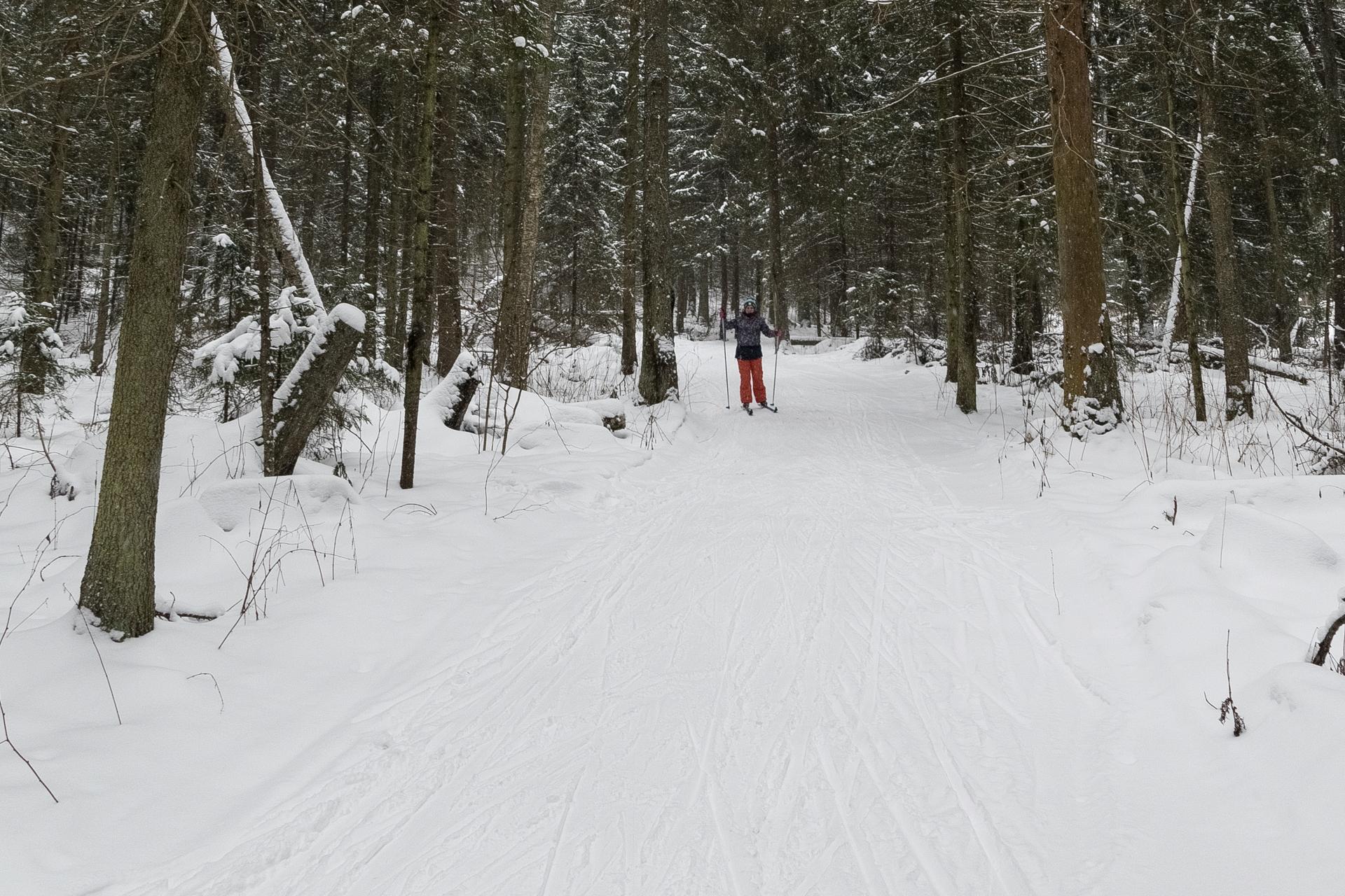 Лесная лыжня