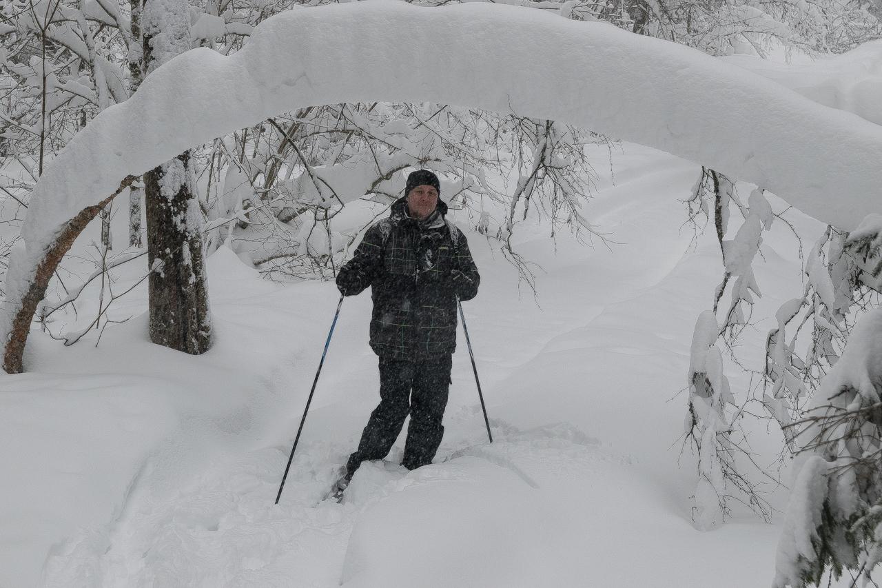 Лыжник в лесу
