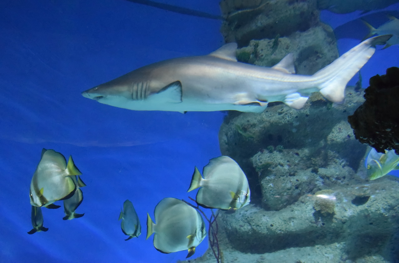 аквариум акула