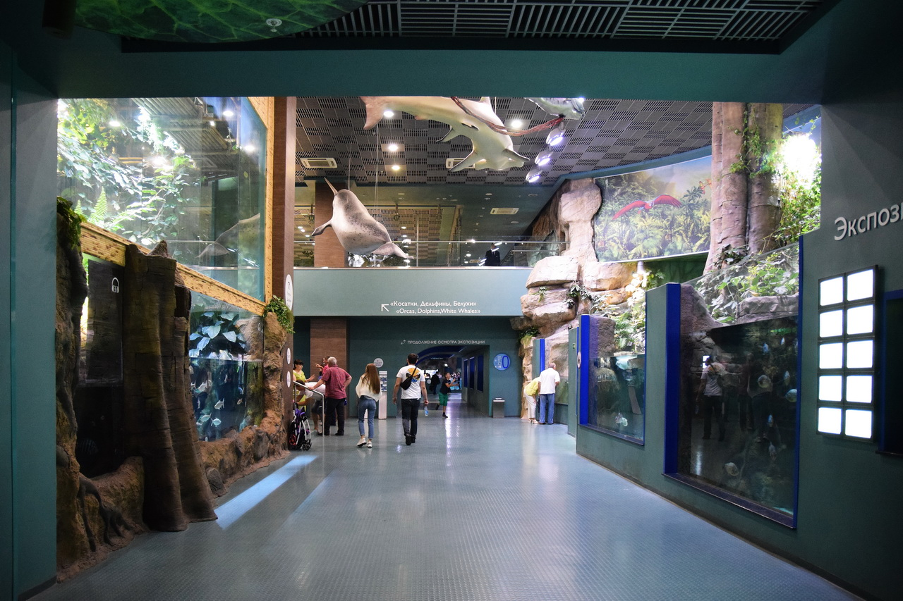 экспозиции аквариума