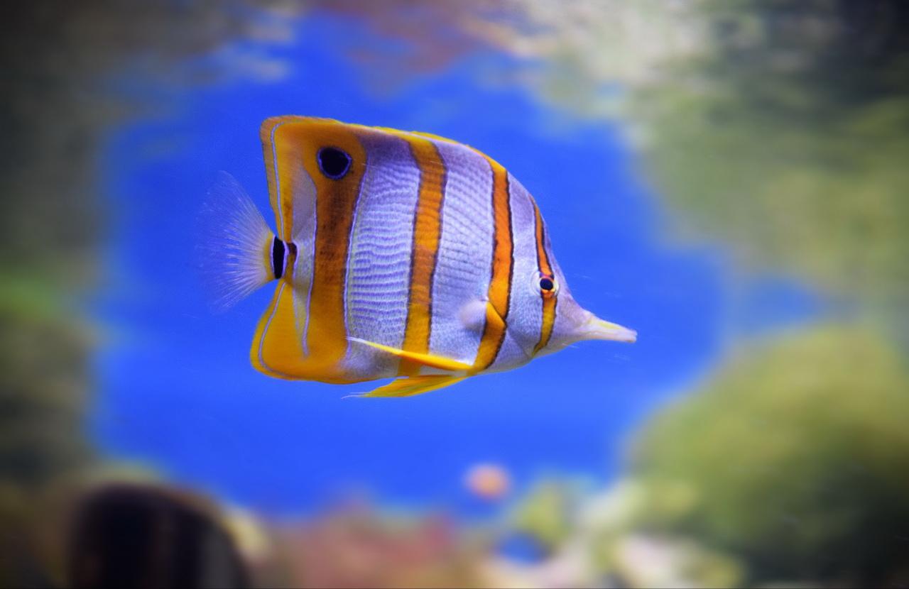 аквариум в москве