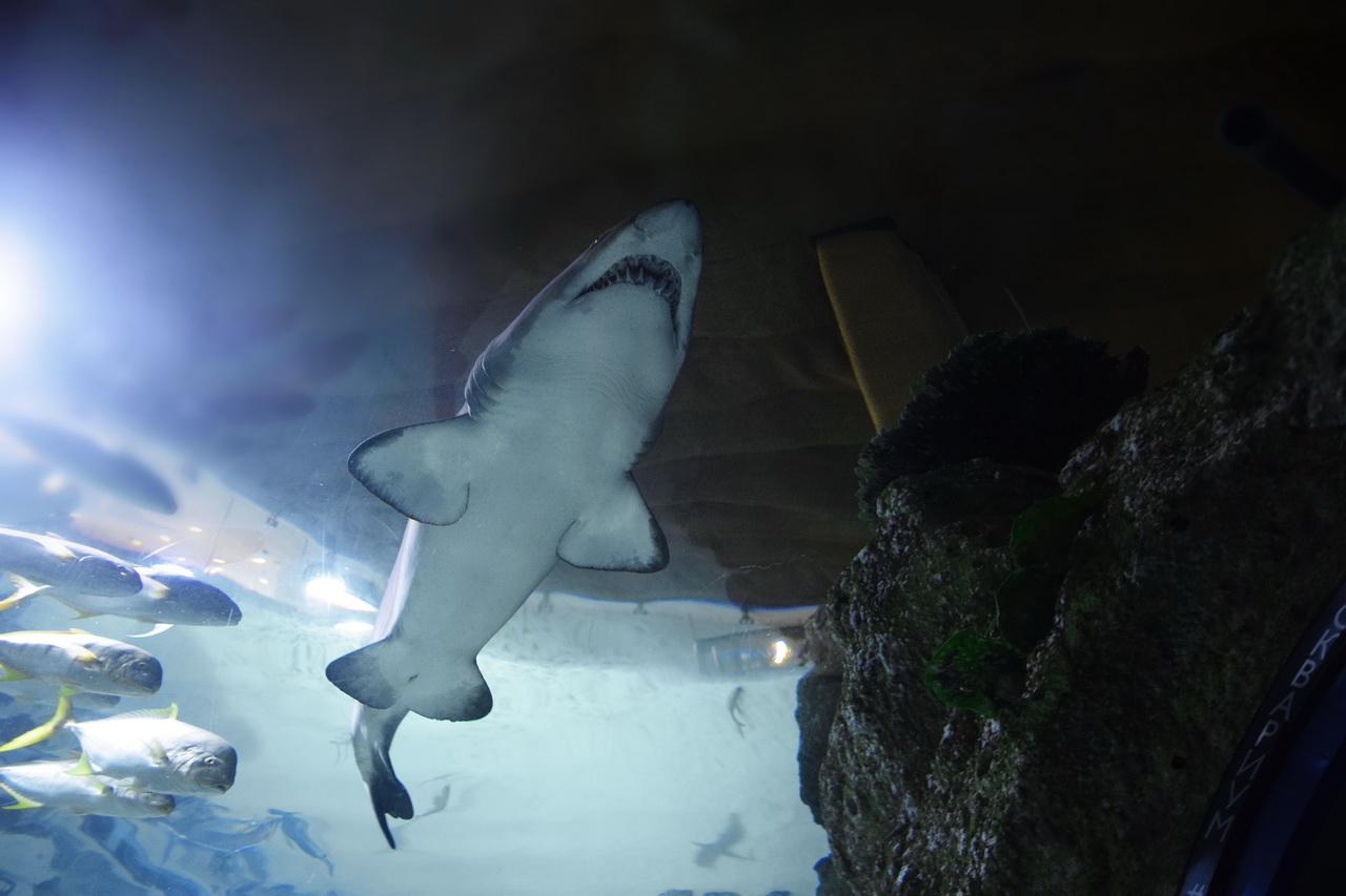 москвариум акула