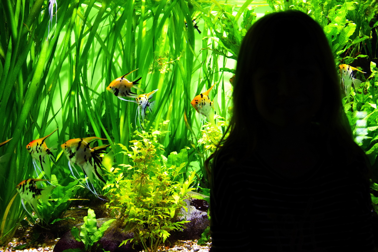 аквариум москвариум